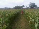 Running in the cornfields