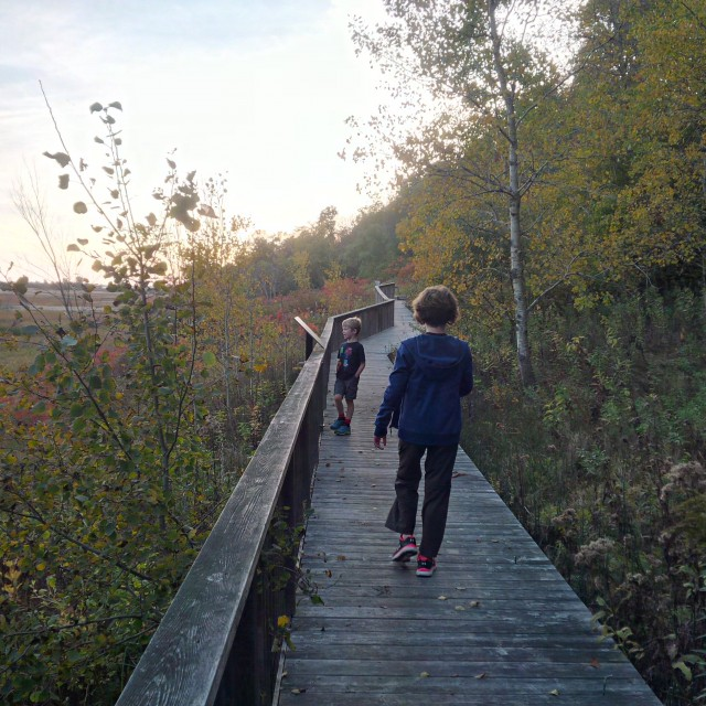 A trail which includes a long boardwalk and extensive views of the marshes.